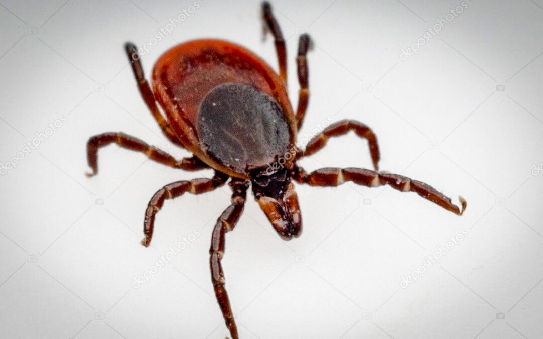 All About Ticks