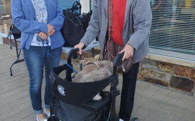 Seniors and Pets- The Benefits By Lori Leduc